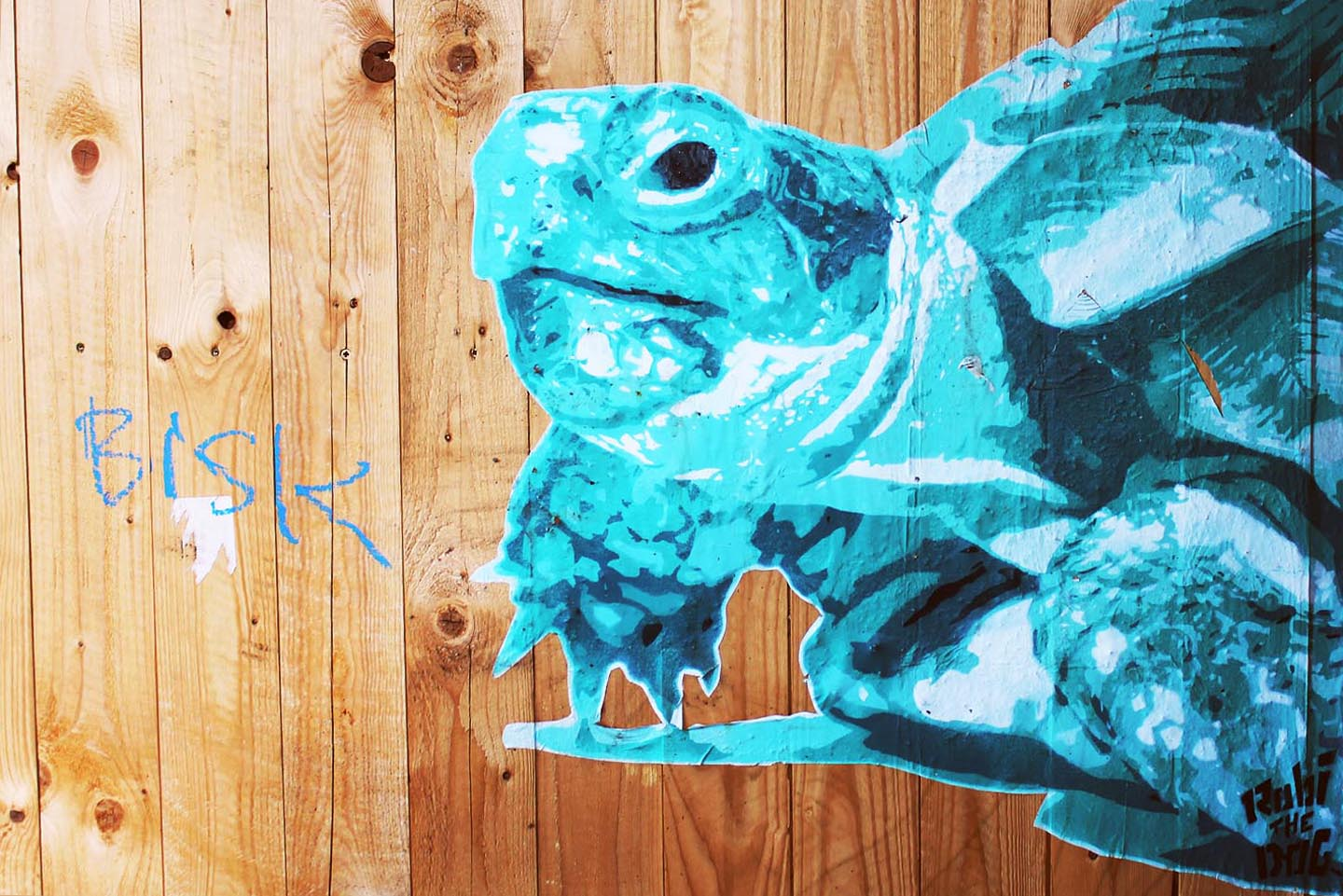 Turtle from Street Artist Robi the Dog in Berlin